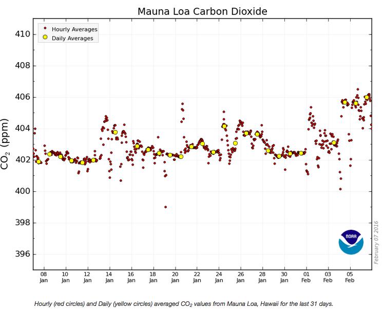 Moyennes horaires et journalières de la concentration de CO2 à l'observatoire Mauna Loa, à Hawai, entre janvier et février 2016.
