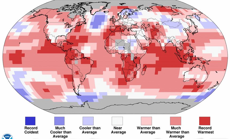 Records en Amérique centrale, en Méditerranée, dans le sud et le littoral nord-ouest de l'Afrique, en Indonésie... Doc. NOAA.