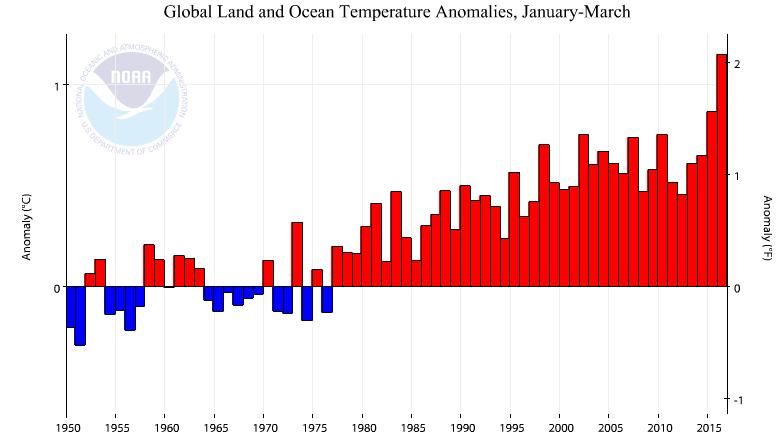 Anomalies de température par rapport à la moyenne du XXème siècle pour les périodes de janvier à mars depuis 1950. 2016 apparaît très largement au dessus des précédents records, y compris 2015. Doc. NOAA
