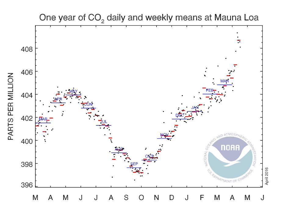 Evolution des moyennes journalières, hebdomadaires et mensuelles, de la concentration atmosphérique de CO2 à l'observatoire Mauna Loa (Hawaï). Les derniers records se trouvent tout en haut, à droite. Doc. NOAA